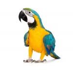 Магазин средств гигиены для птиц