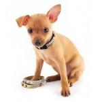 Магазин ошейников, шлеек и поводков для собак