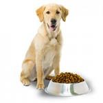 Магазин повседневных кормов для собак