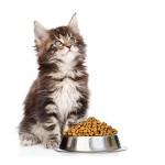 Магазин повседневных кормов для кошек
