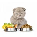 Холистик и беззерновые корма для кошек