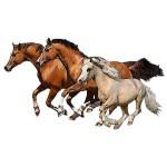 Магазин товаров для лошадей