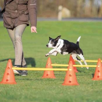 Trixie / Трикси Набор препятствий для аджилити Dog Activity, 6 конусов, 3 рейки, ф 23 ? 30 см, 78 см