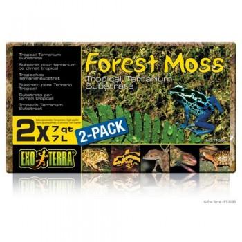 Hagen / Хаген Растение пластиковое Terra Forest Plume Moss