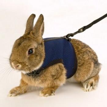 Ferplast / Ферпласт Мягкая шлейка с поводком JOGGING SMALL д/кроликов/2