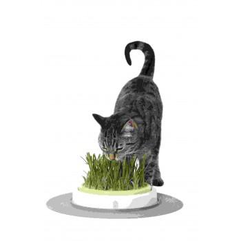 Hagen / Хаген сад с травой для кошек Catit Design Senses