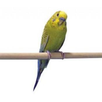 Penn-Plax / Пен-Плакс Жердочки для птиц 30х1см дерево 2 шт/уп (1х12) BA005