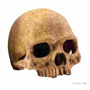 Hagen / Хаген убежище-декор череп примата для террариума